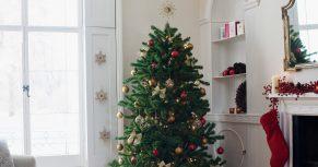 amazon is selling live christmas trees - Amazon Com Christmas Trees